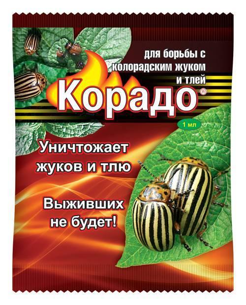 Корадо от колорадского жука: инструкция по применению, как разводить