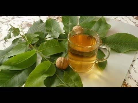 Как приготовить целебную настойку из грецких орехов: 8 рецептов