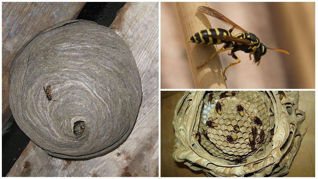 Как избавиться от пчел, отравить: в стене, дома, на даче, чего они боятся?