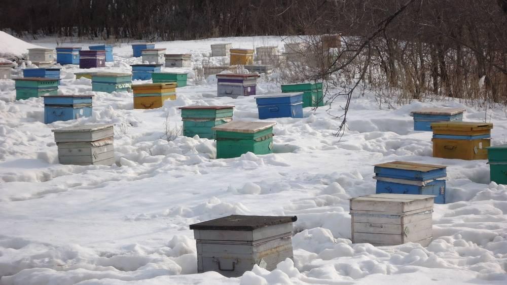Все тонкости подкормки пчел медовой сытой