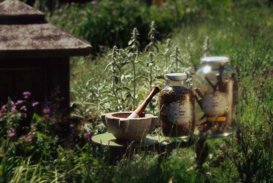 Проволочник в огороде