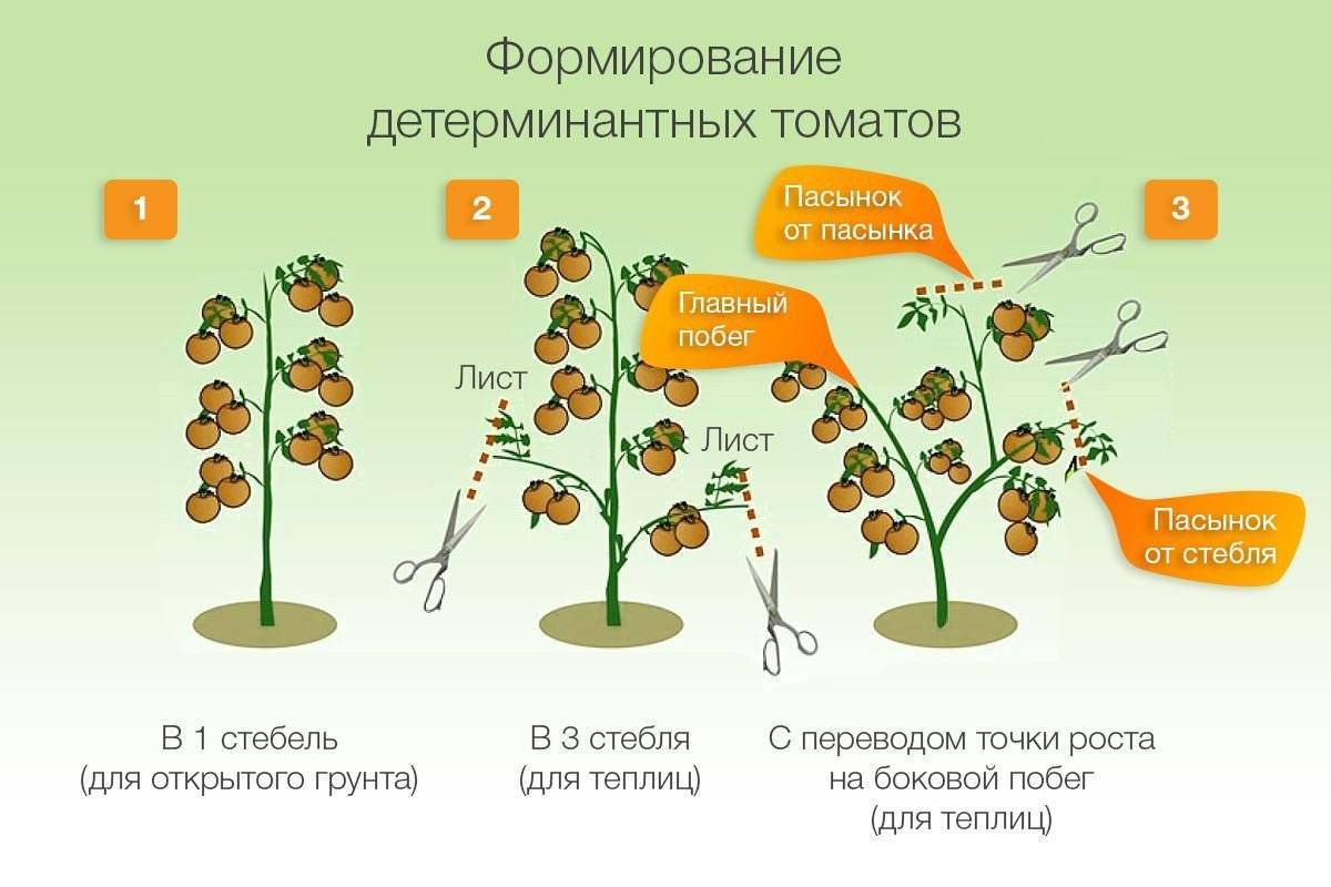 Характеристика и описание сорта томата хлыновский
