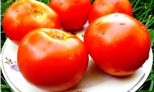 Характеристика и описание томата «белый налив»