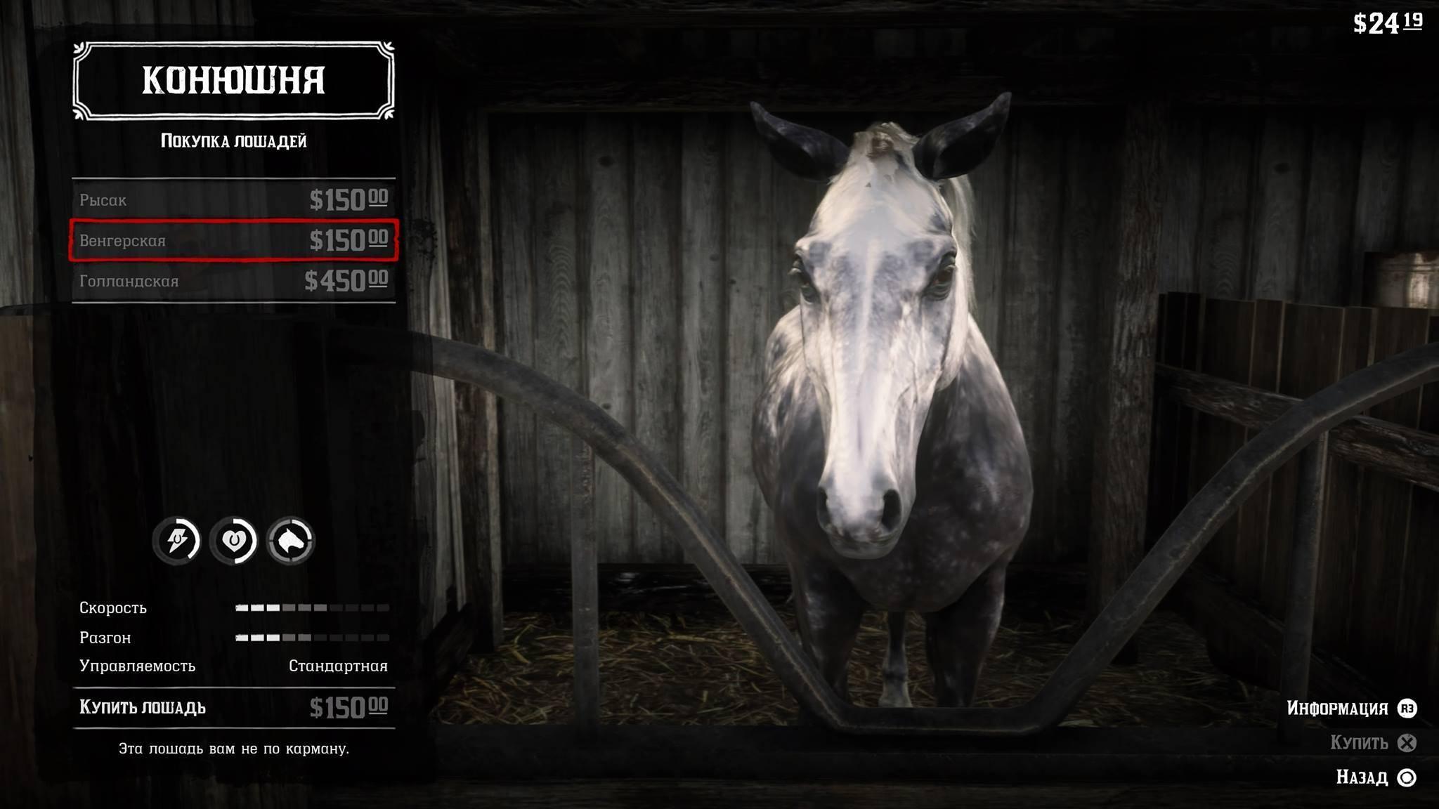 Особенности лошадей породы арабский скакун