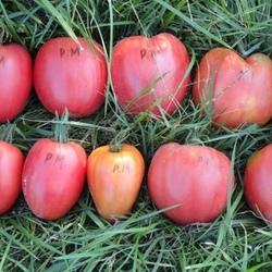 Томат розовый мед — описание сорта, характеристика и особенности выращивания. советы по выбору посадочного материала (135 фото)