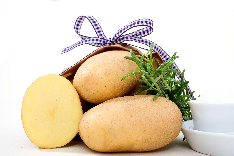 Сорт картофеля джувел: описание и характеристика, отзывы