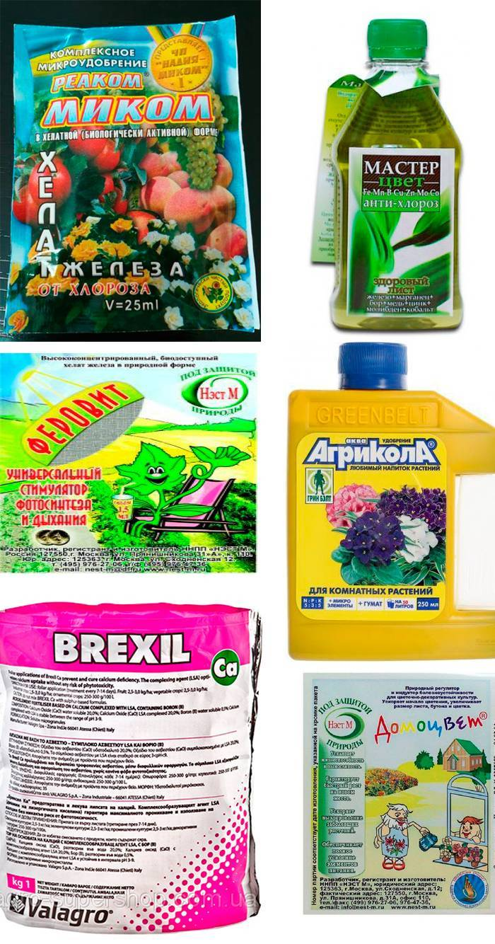 Гортензия крупнолистная: какие болезни могут поразить растение