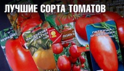 Помидоры для ценителей — томат хуан ю f1: характеристики сорта и советы по выращиванию