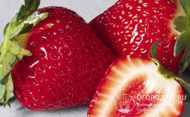 Чудо-ягода: садовая земляника машенька