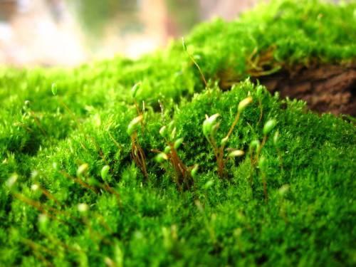 Лишайник и мох на плодовых деревьях как избавиться способы борьбы