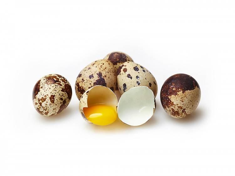 Исследование процесса инкубации перепелиных яиц в домашних условиях