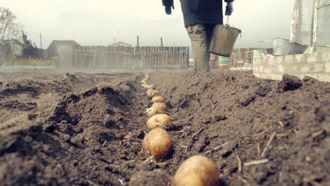 Нитроаммофоска: состав удобрения и его применение в саду и огороде