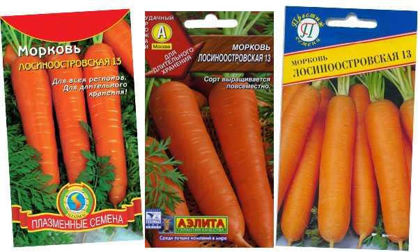 Морковь лосиноостровская — описание сорта, фото, отзывы, посадка и уход