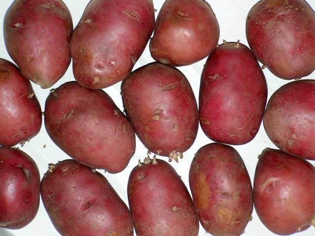 Картофель журавинка: поздний сорт для средней полосы, получающий хорошие отзывы