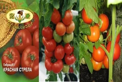 """Томаты """"карамель красная"""" f1: уникальное описание сорта помидор, урожайность, борьба с вредителями и плюсы выращивания"""