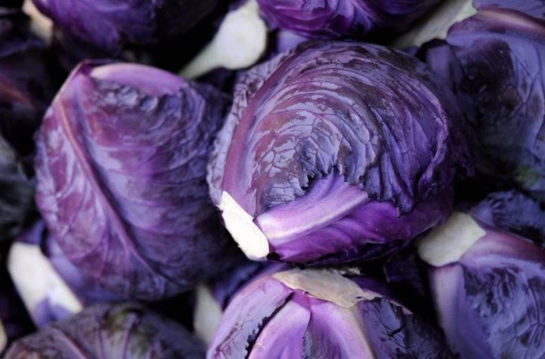 Красная капуста: польза и вред, что приготовить