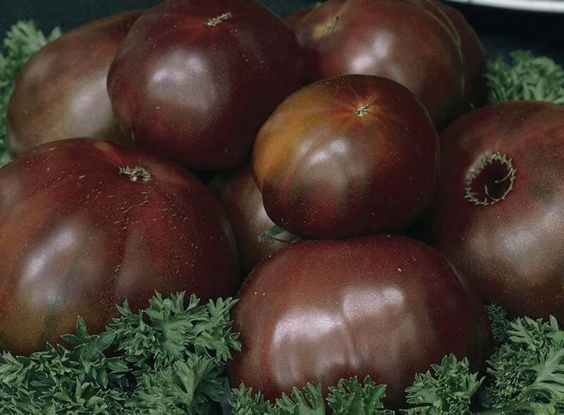 Сорт томата шоколадный: описание и фото
