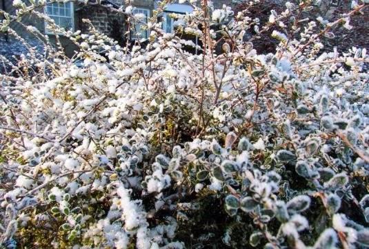 Как посадить жимолость весной саженцами — пошаговое руководство