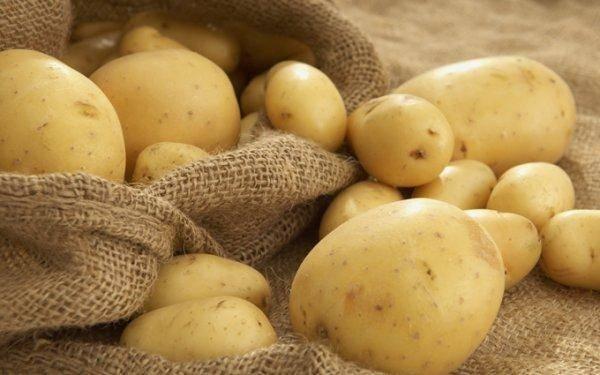 Картофель рагнеда: характеристики сорта, вкусовые качества, отзывы