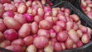 Картошка ред скарлет — описание и время созревания