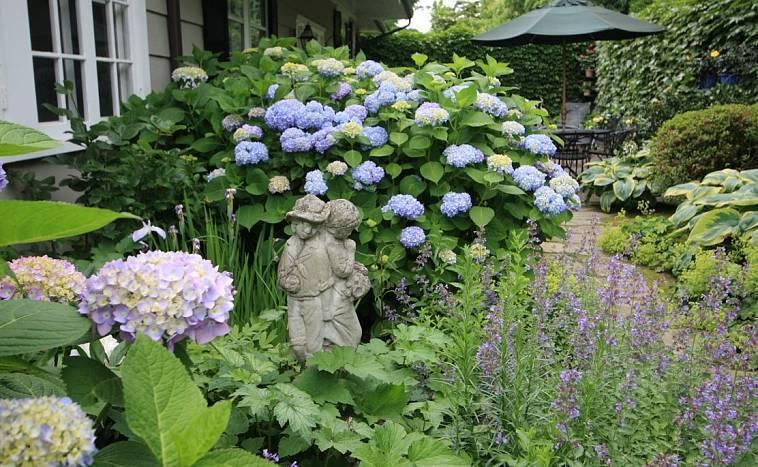 Виды и фото гортензий для ландшафтного дизайна сади и дачи