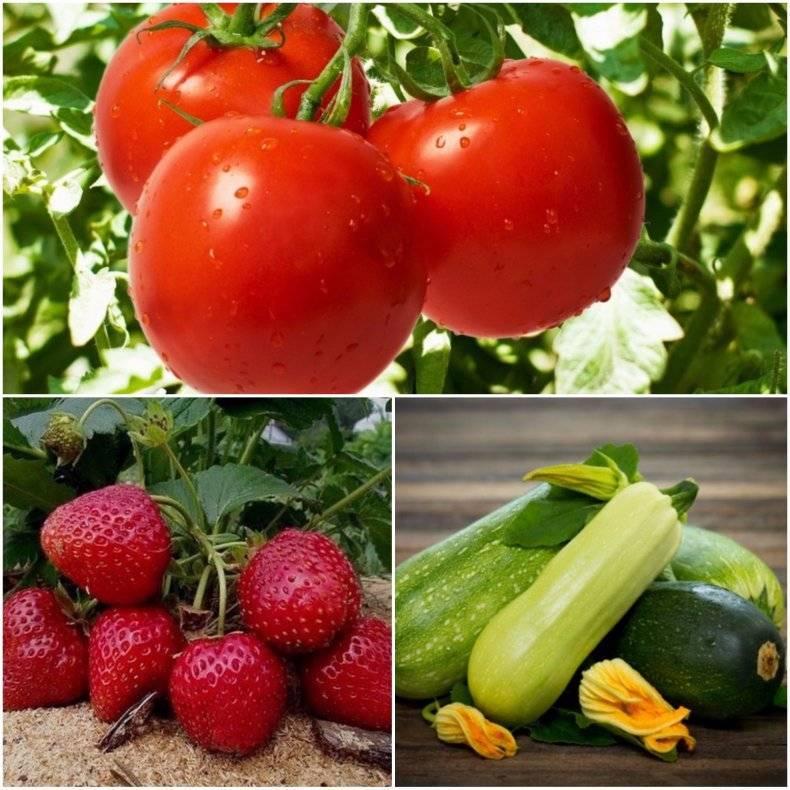 Что класть в лунку при посадке помидор