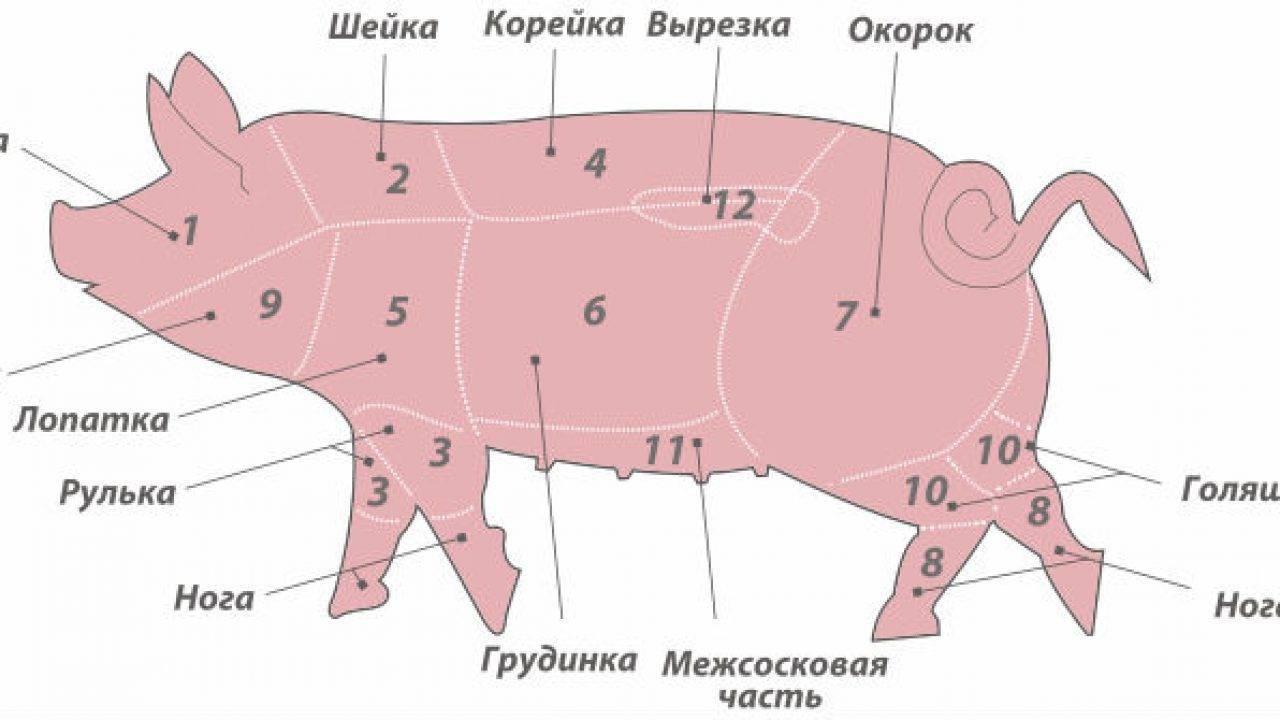 Сколько мясной продукции можно получить из одной свиньи?
