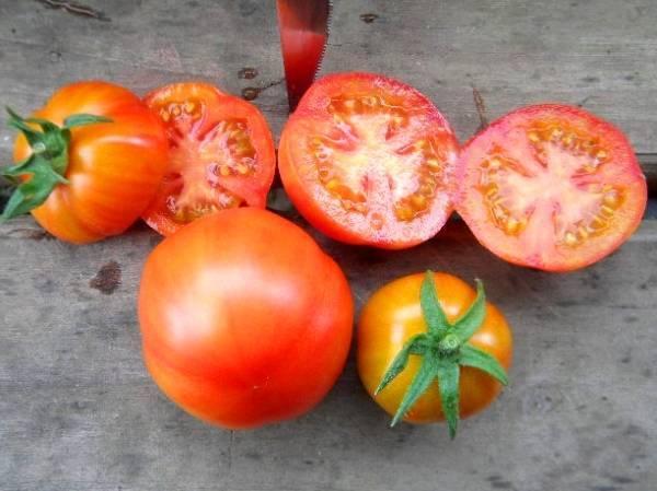 Описание и характеристика томатов сорта санька