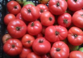 Томат «сладкое чудо»: крупные плоды с ярко-выраженным вкусом