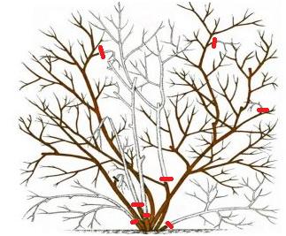 Выращивание голубики в подмосковье