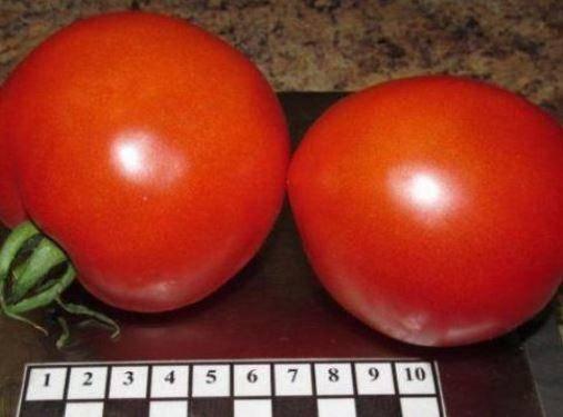 Томат адамово яблоко: описание, фото, отзывы