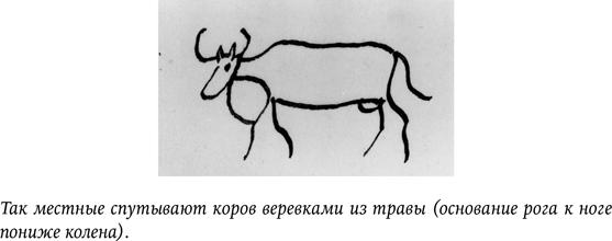 Зачем корове нужны рога. что делать при травмах, как провести удаление рогов