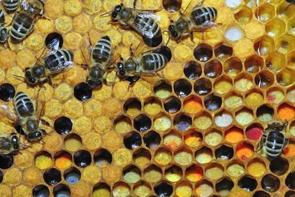 Сахарный сироп для пчел или медовая сыта   практическое пчеловодство