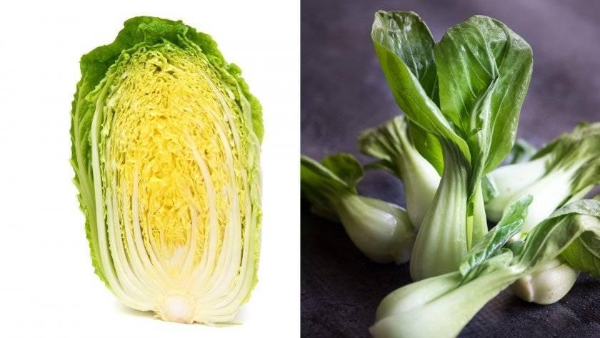 Пекинская капуста: польза и вред для взрослых и детей, вкусные блюда и применение в народной медицине