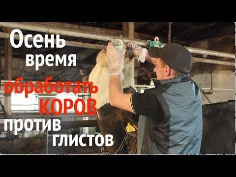 Глисты у коров: симптомы, лечение и профилактика