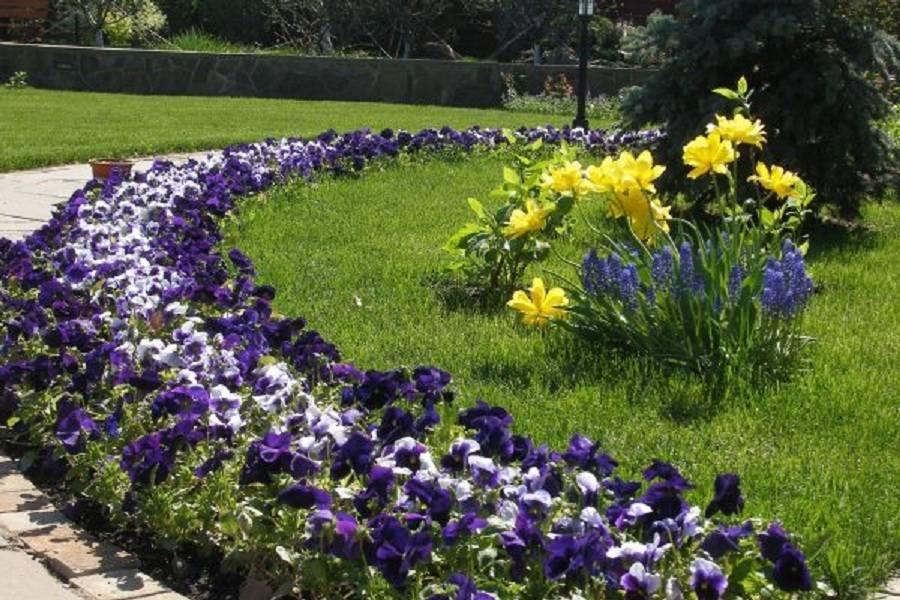 Устройство цветника непрерывного цветения из многолетников