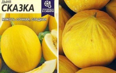 Дыни в сибири: сорта и особенности выращивания