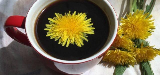 Кофе из корней одуванчика: польза и вред, как заваривать