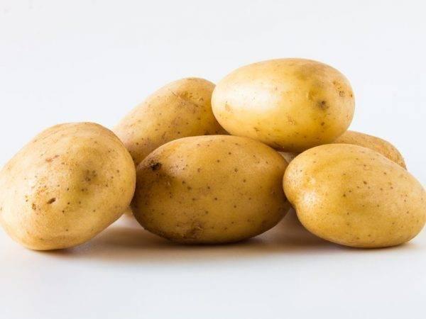 Новый и перспективный картофель «василий»