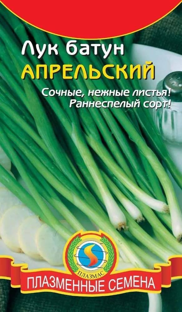 Особенности выращивания и ухода за луком батун