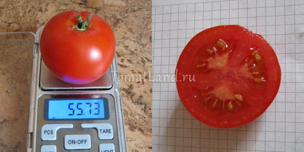 """Томат """"толстые щечки"""": описание и характеристика сорта, советы по применению помидор"""