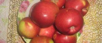 Карликовая яблоня Соколовское: описание, уход, фото и отзывы