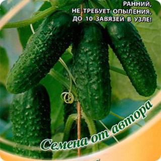 Описание сорта огурцов изумрудные сережки, его выращивание и уход