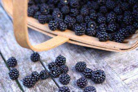 Сорт тайберри: всё о необычной и вкуснейшей ягоде-ежемалине