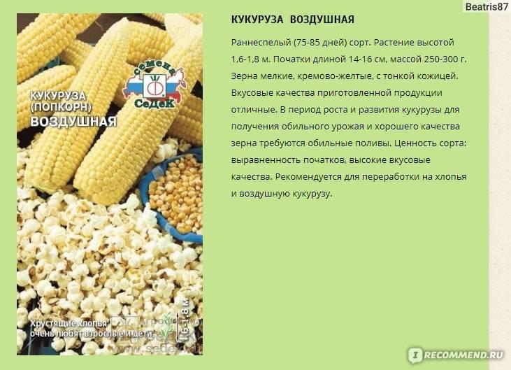 Кукуруза для попкорна: разбираем сорта и методику приготовления