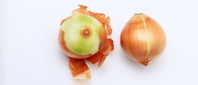 Луковая шелуха для рассады томатов и перцев: вся суть