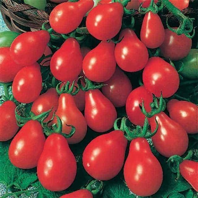 """Томат """"груша оранжевая"""": описание сорта, особенности ухода, фото помидоры"""