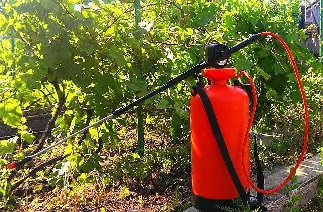 Кабрио топ для винограда — фунгицид, инструкция