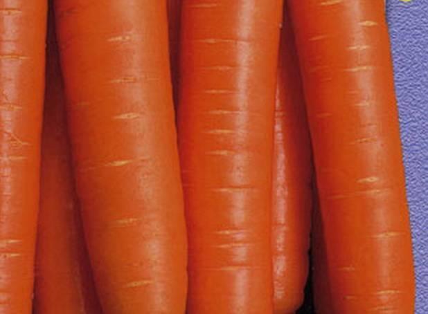 Морковь лакомка — описание сорта, фото, отзывы, посадка и уход