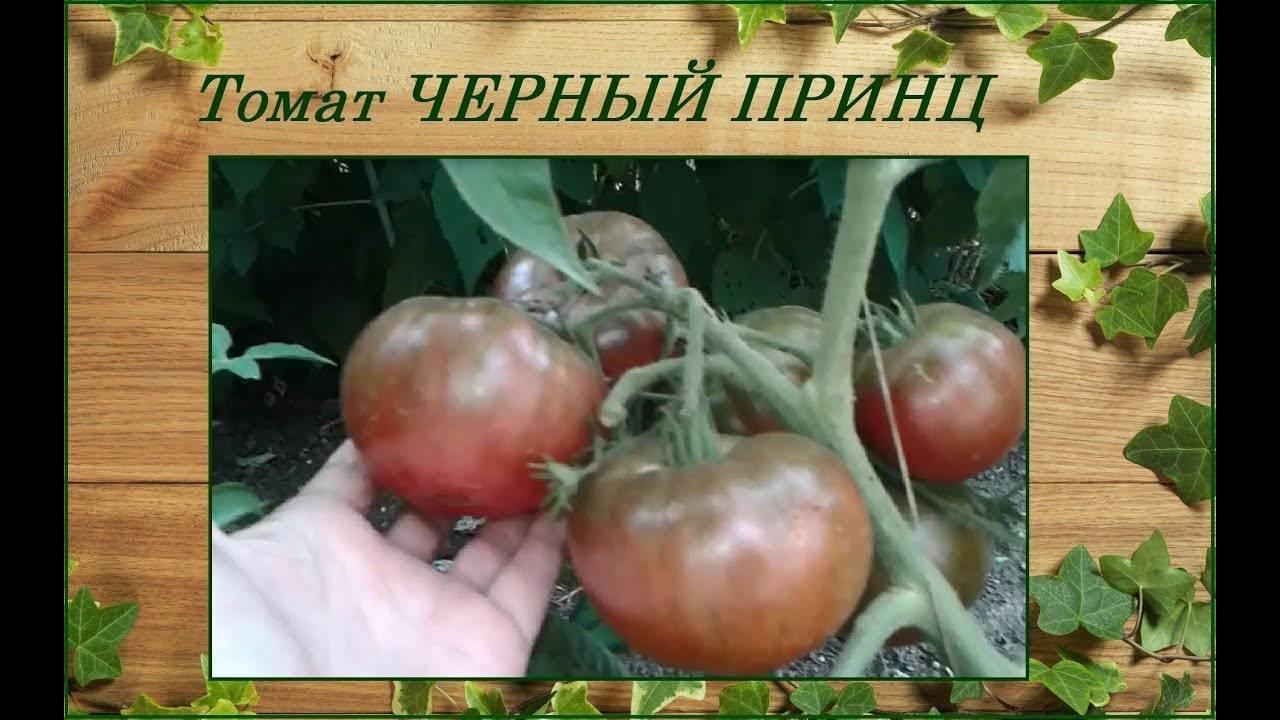 Томат дачное лакомство: характеристика и описание сорта, фото, отзывы, урожайность